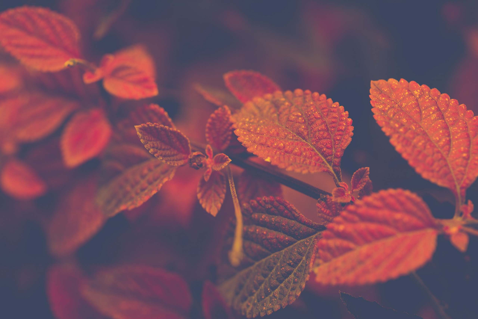 Garden design for autumn